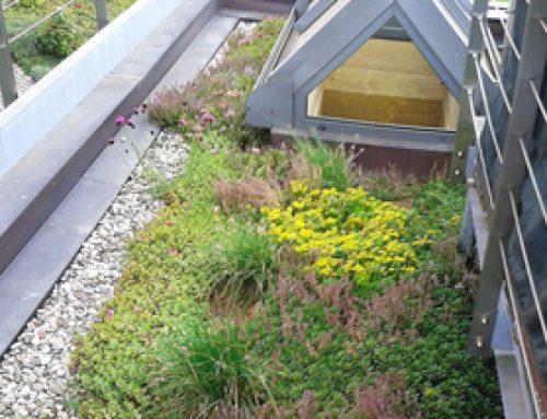Dachgärten & Grüne Dächer