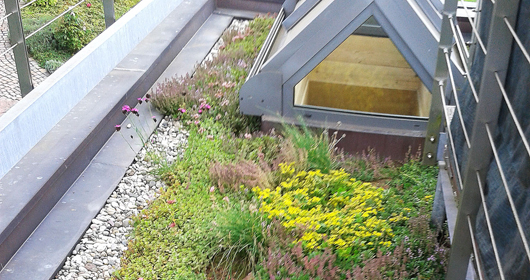Dachgärten - Bergmann Galabau